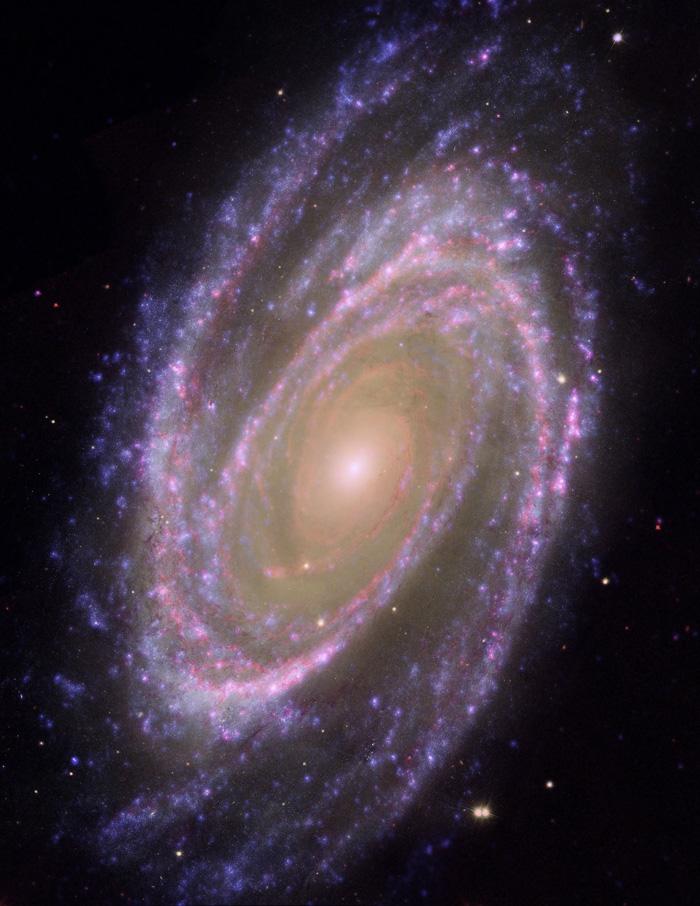 Bode´s GalaxyM 81 - NGC 3031