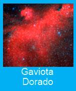 Gaviota-Dorado