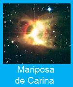 Mariposa-Carina