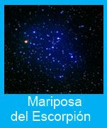 Mariposa-Escorpion