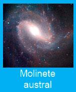 Molinte-austral