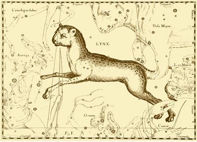 Lynx-Hevelius