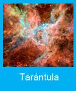 Tarántula