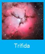 Trifida