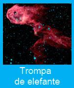 Trompa-elefante